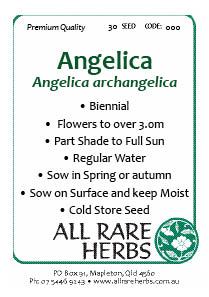 Anelica seed