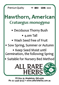 Hawthorn American