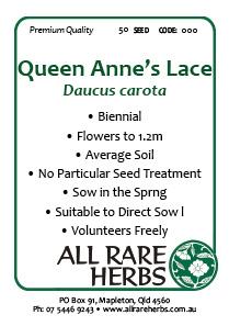 Queen Annes Lace