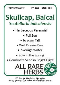 Skullcap Bacial