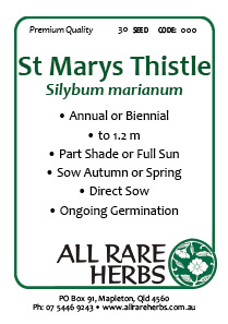 St Marys Thistle
