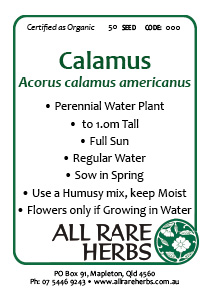 Calamus, seed
