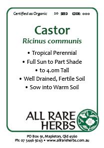 Castor (Oil Plant), seed