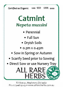 Catmint, seed