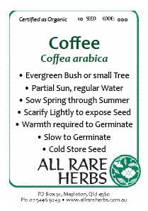 Coffee, seed