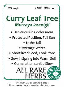 Curry Leaf Tree, seed