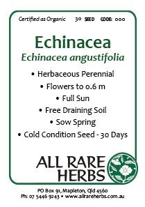 Echinacea angustifolia, seed