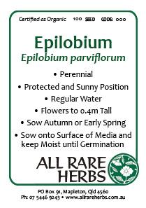Epilobium / Willow Herb, seed