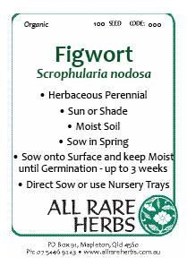 Figwort, seed