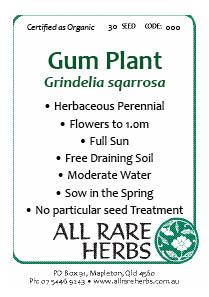 Gum Plant, seed