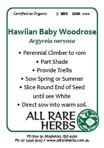 Hawaiian Woodrose, seed