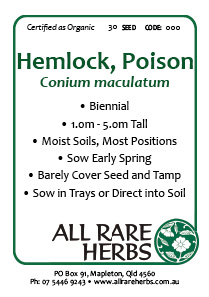 Hemlock, Poison  seed