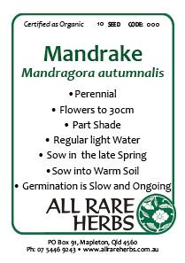 Mandrake, Autumn  seed