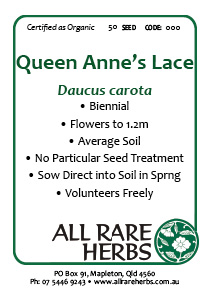Queen Annes Lace, seed