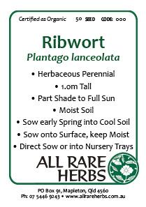 Ribwort, seed