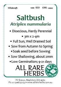 Saltbush, seed