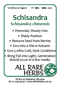Schisandra, seed