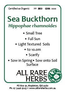 Sea Buckthorn, seed