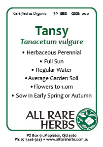 Tansy, seed