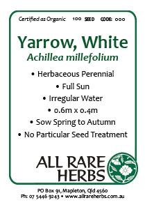 Yarrow, White  seed