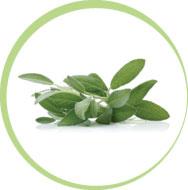 buying herbs & plants