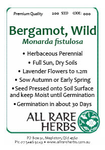 Bergamot Wild